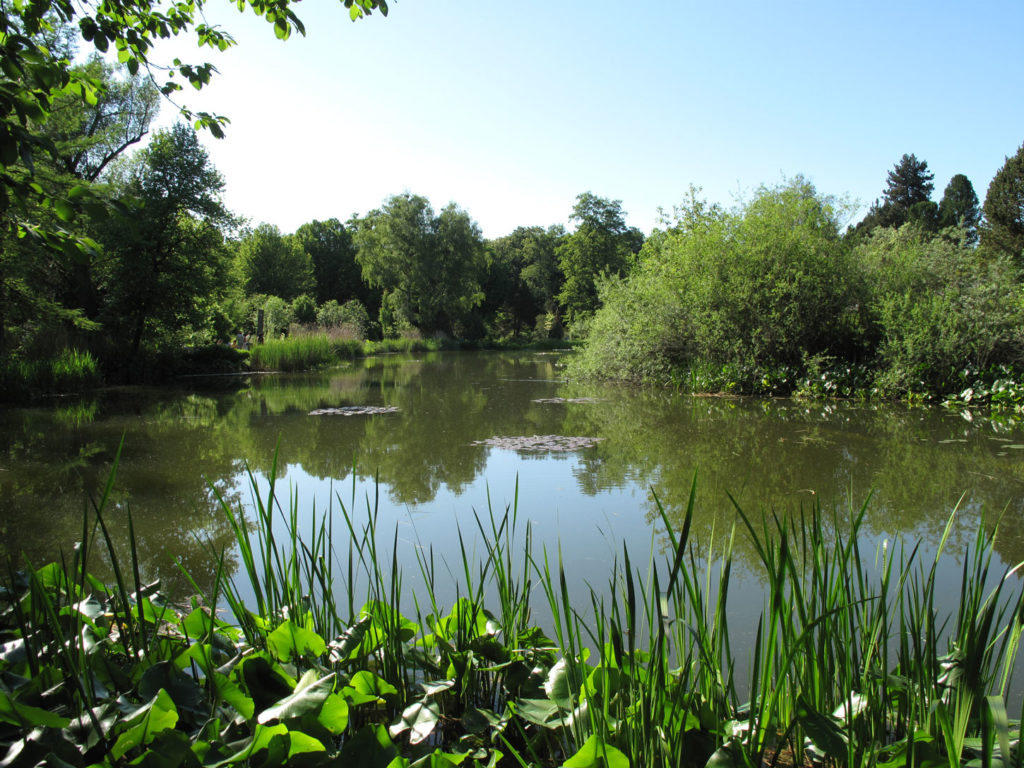 Botanischer_Garten_See-1